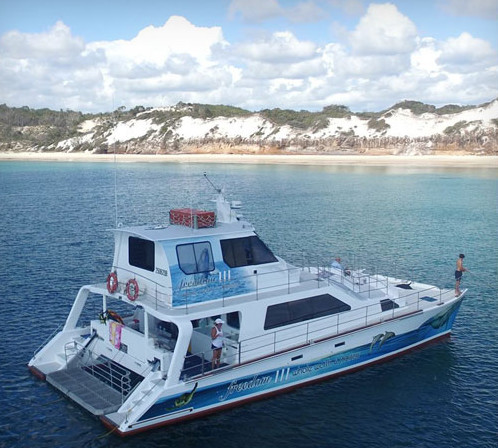 Freedom whale watch and charters hervey bay